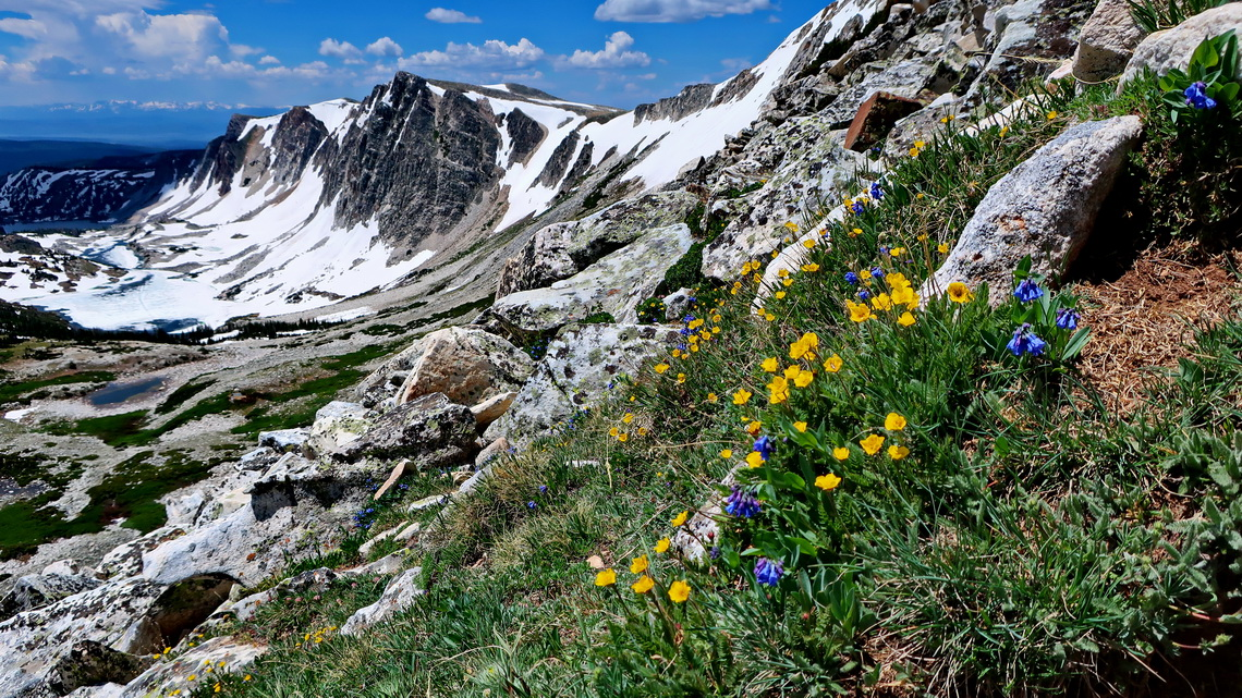 Flowers with Medicine Bow Range