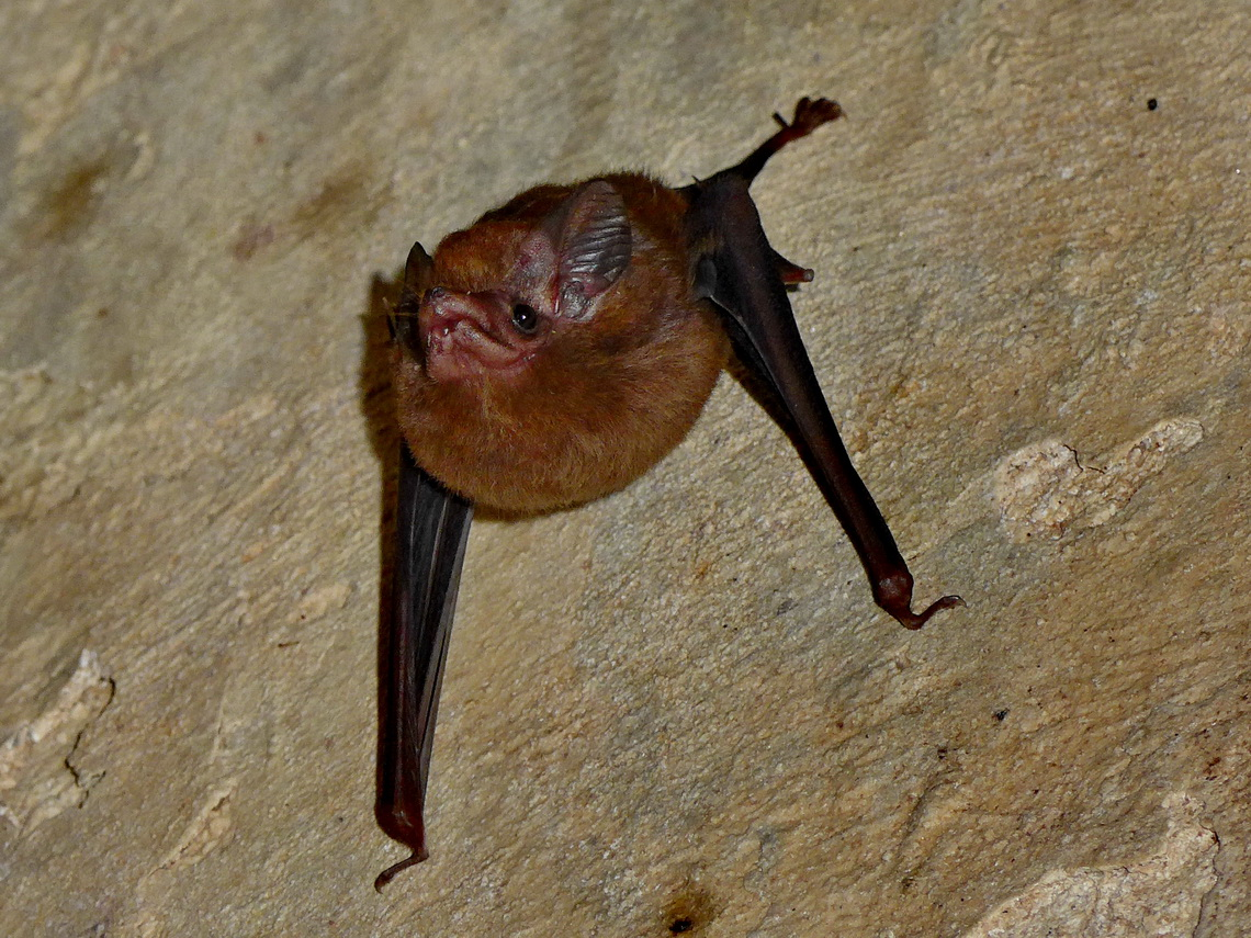 Bat in the labyrinth