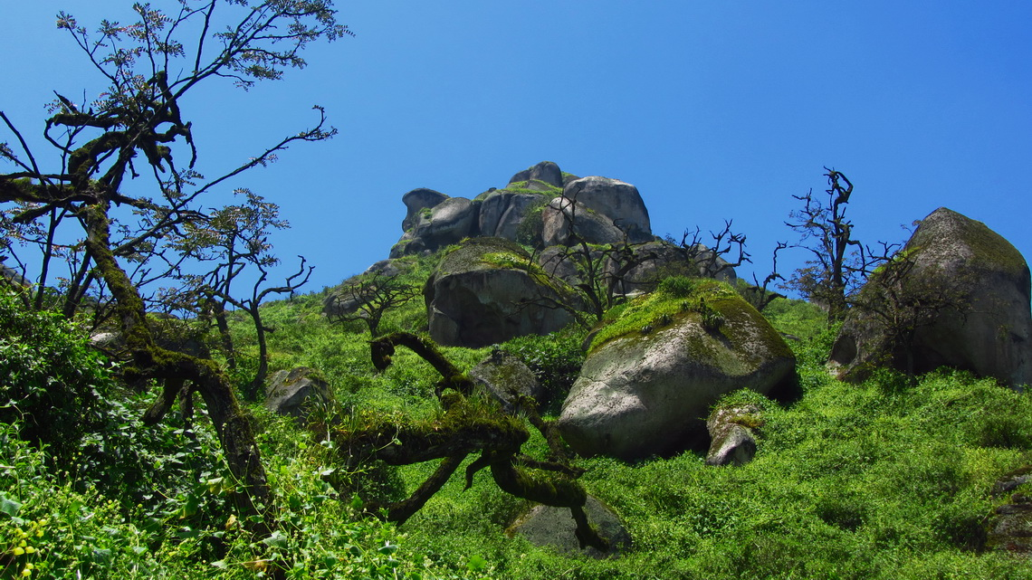 Rocks with trees and dense vegetation