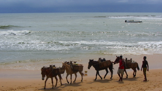 Donkeys on the first beach, the other means of transport in Morro de Sao Paulo