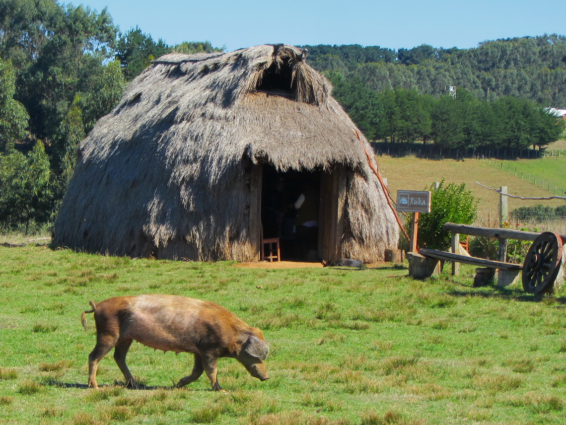 Replica of an original Mapuche living house