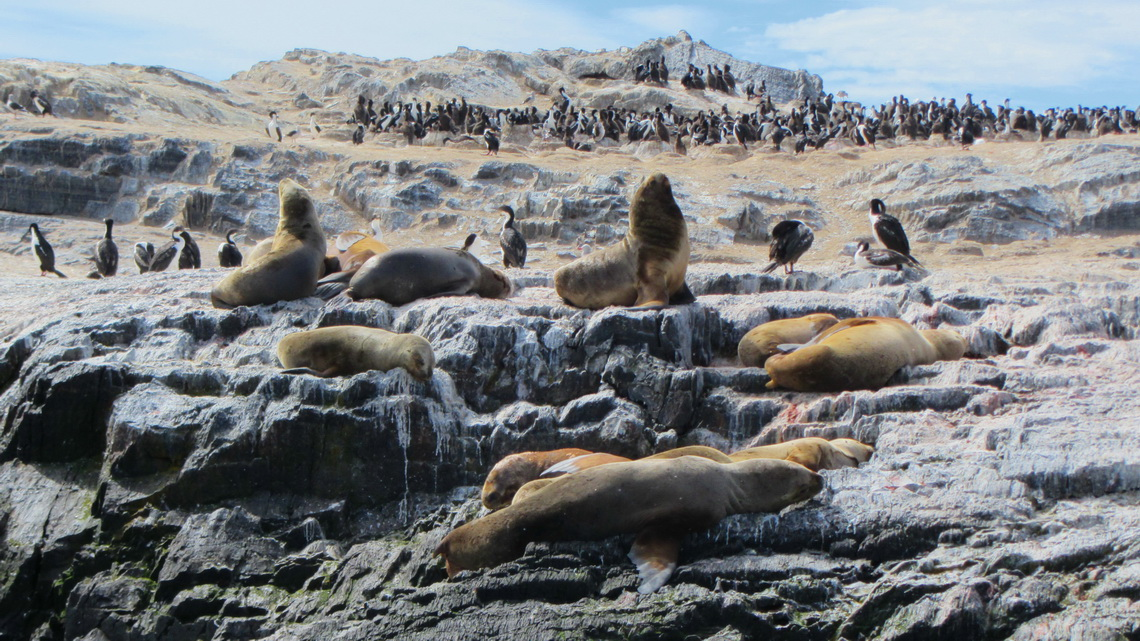 Lazy Sea Lions and bustling Cormorants in the background
