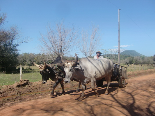 Ox cart in the Yvytyruzu sanctuary