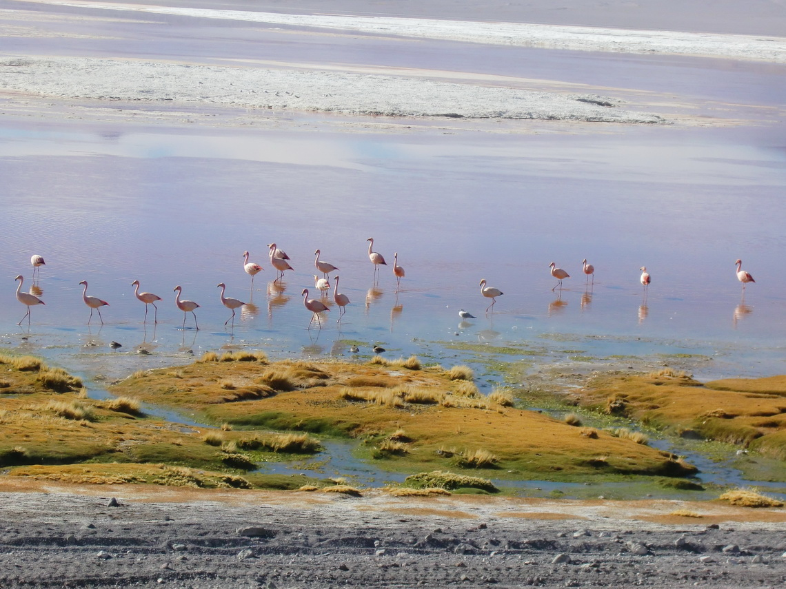 We could walk very near to the flamingos