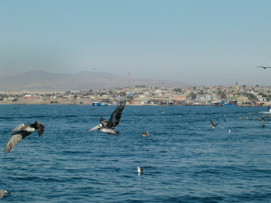 The birds of Caldera