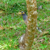Bird of Koh Chang