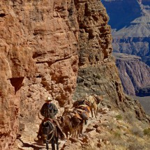 Traffic on the South Kaibab Trail