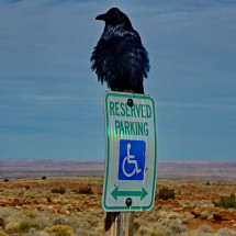 Raven with Painted Desert