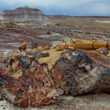 Petrified logs in the Crystal Forest