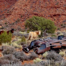Broken car with horses seen on Lee Cly Trail