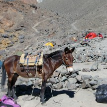 Our mule is back in the base camp