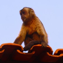 Monkey watching us