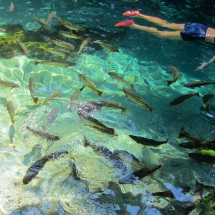 Snorkeling with many fishes