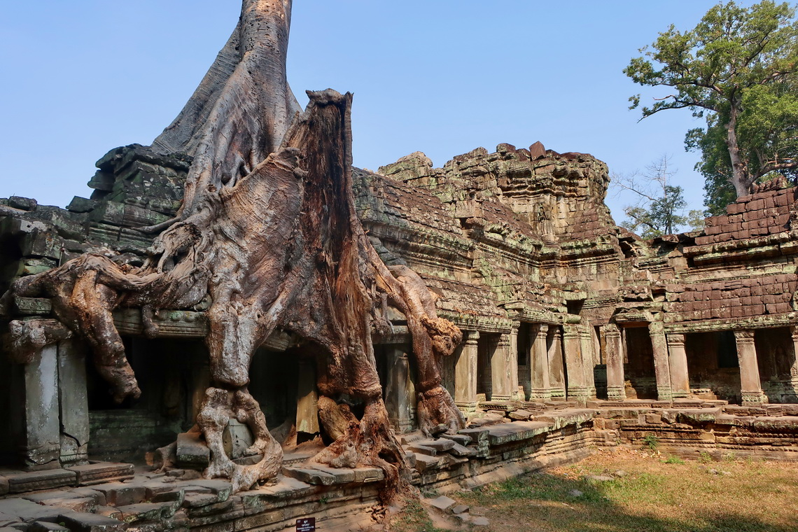 Preah Khan Ruins - Nature comes back