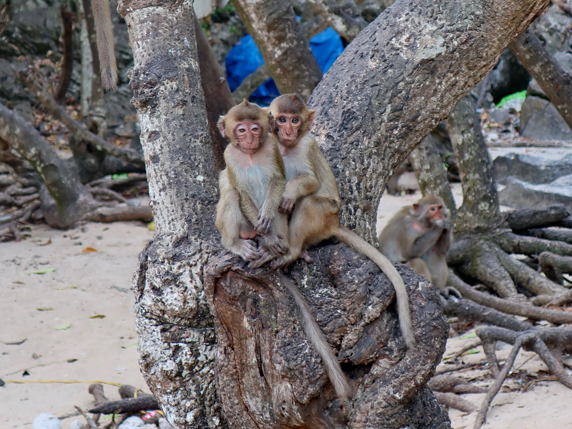 Monkeys on Monkey Island