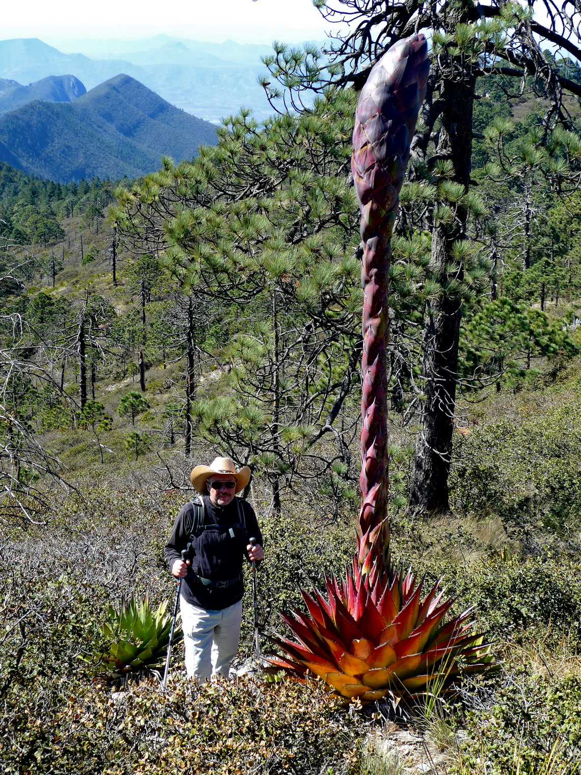 Tommy and a big Agave flower with red leaves on the way to El Penitente
