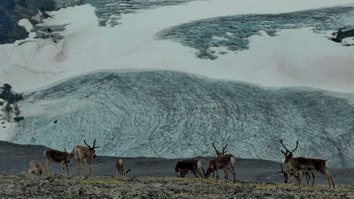 Reindeer with glacier