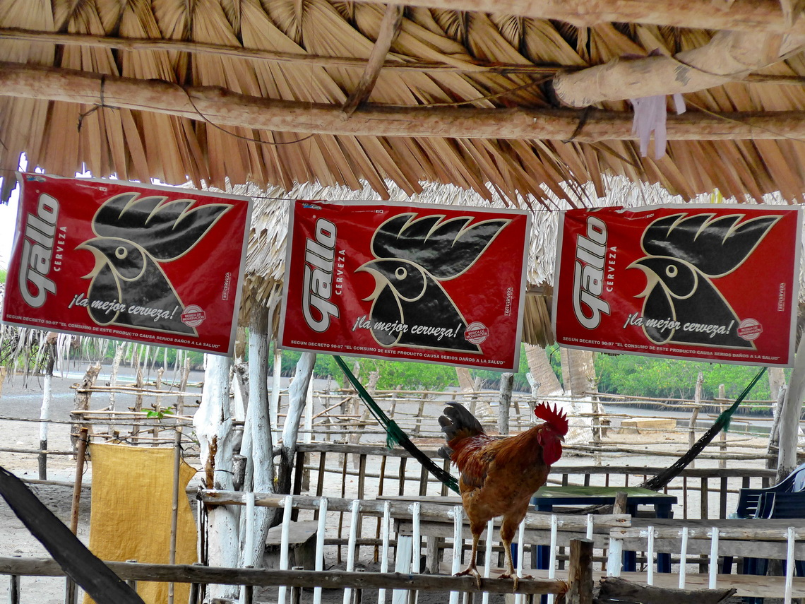 Living Cock and advertisements for the cock beer on our campsite