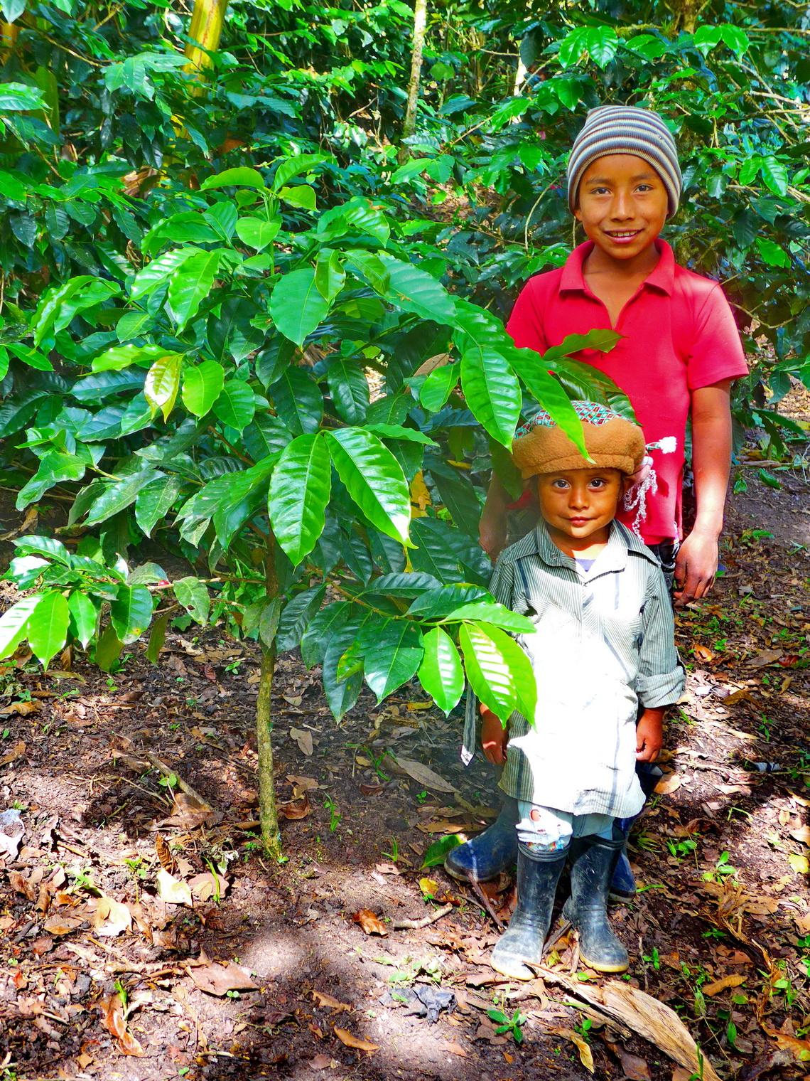 Two kids with Coffee plants on the trail between Alto de San Andres and El Aguacate to the tombs of Tierradentro