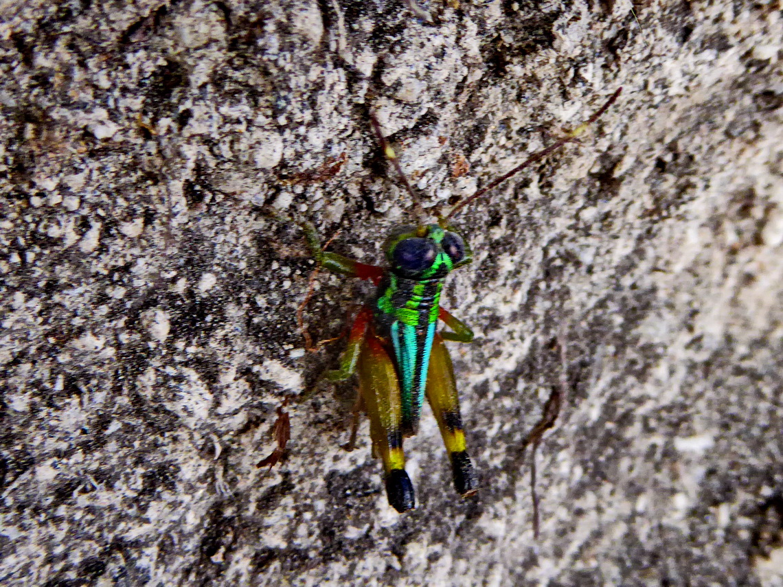 There is still live in the grave - Colorful insect of the underworld