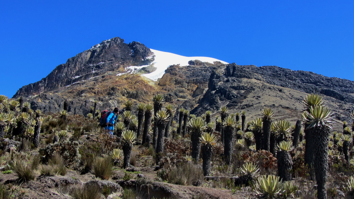Back in the typical Frailejones plants of the Paramo - the best access to the snow is on the right side of the highest rocks
