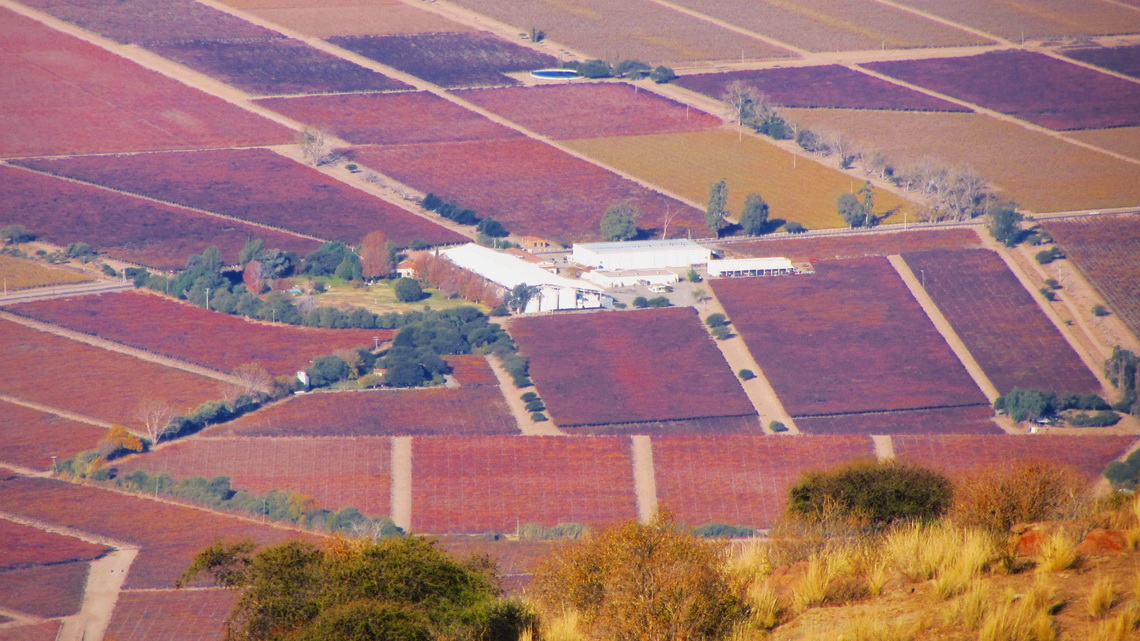 Winery seen from Cerro San Isidro