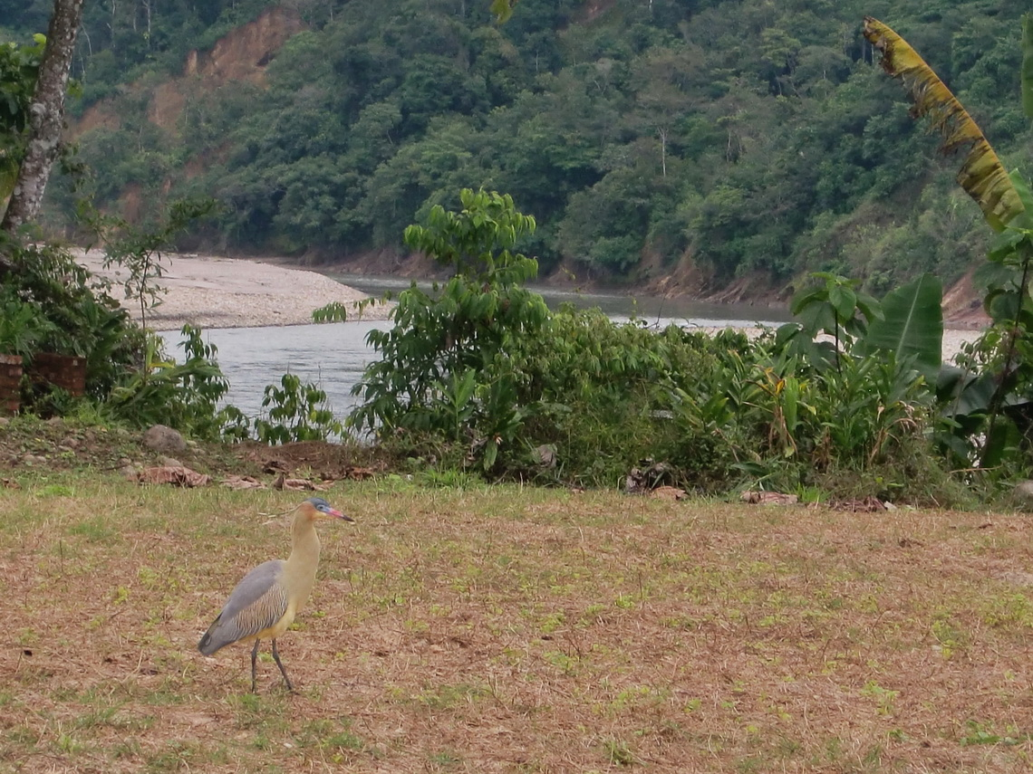 Our campground in Villa Tunari with a beautiful bird